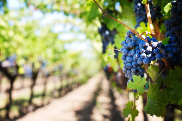 corso di segretaria azienda vitivinicola